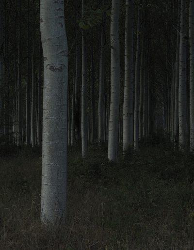 Avenue dans la Forêt